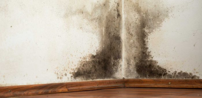 Black Mold - Mold Remediation